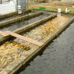 Măsuri pentru asigurarea accesului la finanțare a producătorilor agricoli şi a celor care au exploataţii în piscicultură