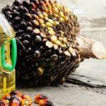 Uleiul de palmier: sănătos sau nesănătos?