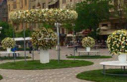 Pregătirile pentru Festivalul Timfloralis sunt în toi