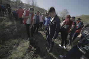 Social-democrații au plantat în Timiș peste 200 de copaci