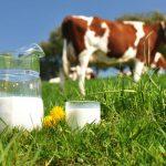 Micii producători de lapte, sprijiniți cu 11 milioane de euro
