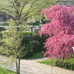 Alei, mobilier urban nou, dar și plantări de arbori în Parcul Alpinet