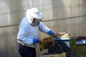 Guvernul acordă sprijin de peste 97 de milioane lei pentru apicultori