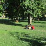 28 de migranți depistați de polițiștii locali în două parcuri din Timişoara