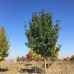 Acțiune de împădurire: Plantează un copac pentru un mediu mai curat