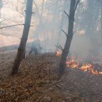 Arde pădurea dintre localităţile Nădrag şi Fârdea