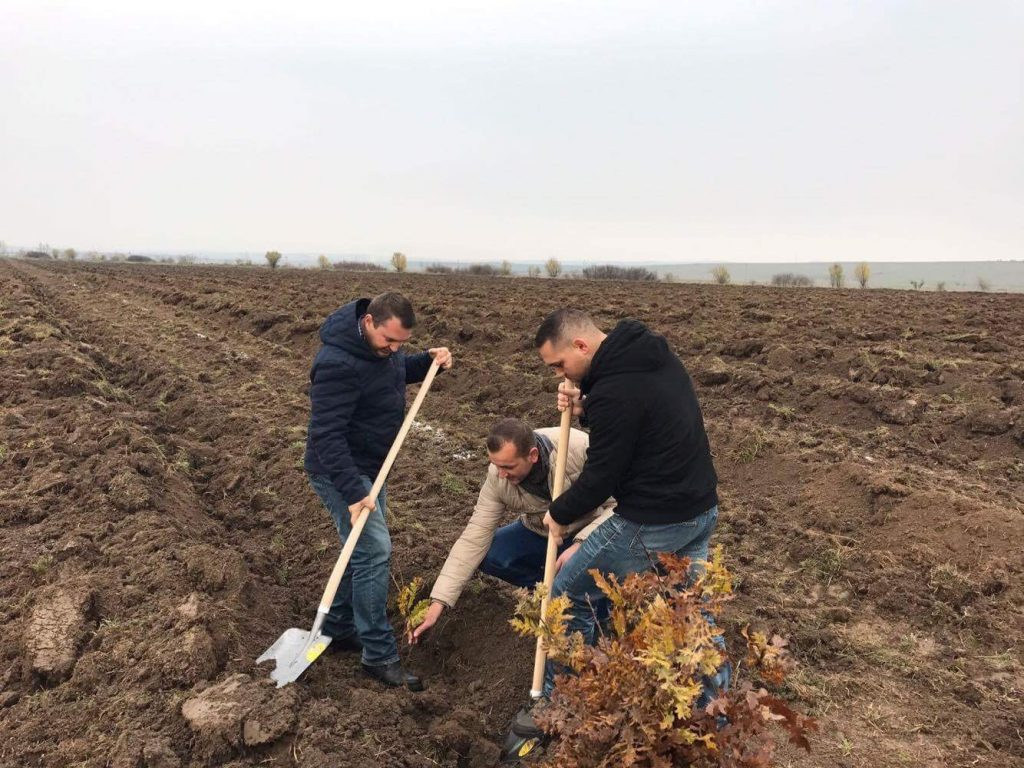 Mii de arbori plantați la Topolovățu Mare la inițiativa primarului ALDE
