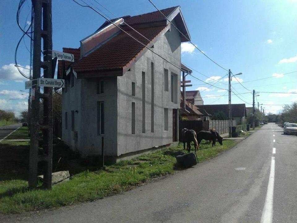 Caii se plimbă liberi prin cartierul Plopi. Ce amendă a primit proprietarul