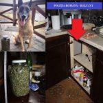 Droguri găsite de câinele polițist JEF