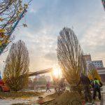 80 de arbori şi 3.000 de arbuşti vor decora spaţiile exterioare la  clădirea de birouri UBC 1 de la Iulius Mall