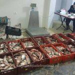 130 kg de pește confiscat de polițiștii de frontieră mehedințeni