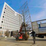 O adevărată pădure a fost plantată în zona Iulius Mall