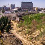 Foto. 1.400 de arbori aduşi din Italia pot fi admiraţi în zona Iulius Mall