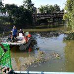 Polițiștii locali au organizat o nouă acțiune de ecologizare a malurilor Begăi, între Podul Traian și Dacilor