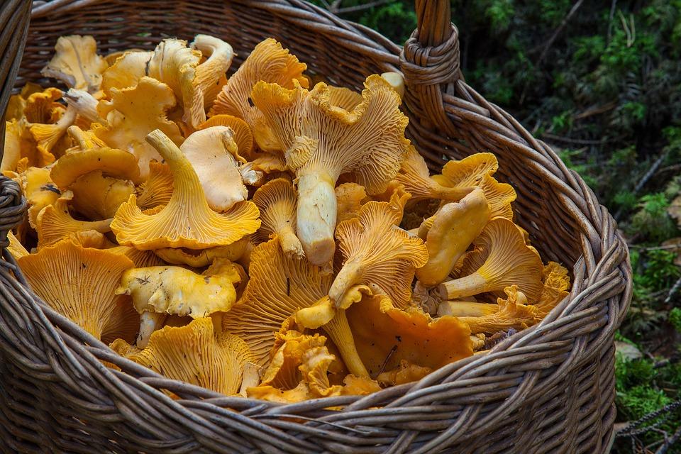 Atenție ce ciuperci consumați în această perioadă