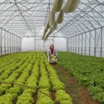 Mii de locuri de muncă pentru români în Europa. Spania caută agricultori, iar Olanda angajează muncitori în sere