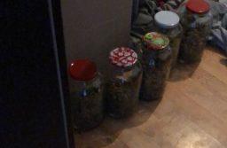 Descinderi la o grupare infracțională specializată în cultivare și trafic de cannabis