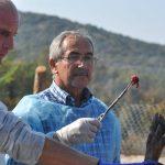 Medicii DSVSA Timiș au luat probe de la un mistreț pentru depistarea pestei porcine