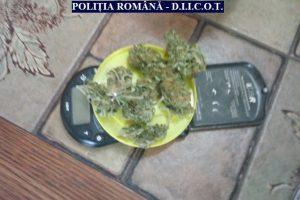 Doi arădeni, care au adus din Spania 1 kg de canabis, arestaţi pentru 30 de zile