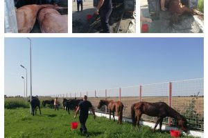 FOTO. Cai prăbusiți la pământ din cauza unui proprietar iresponsabil