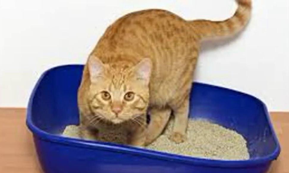 Crescătorii de pisici, acuzați de primarul Lugojului că fură nisipiul de la locurile de joacă