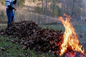 Robu face apel la timișoreni să nu mai dea foc la frunze, majoritatea căzute din copacii plantaţi de el