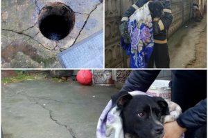 Căţel căzut în fosa septică, salvat de pompieri