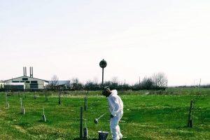Lucrari de întreținere a pomilor din Recaş, Izvin şi Herneacova