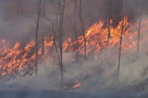 Incendii de vegetaţie uscată în judeţul Hunedoara