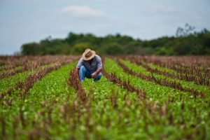 Prima măsură ce vine în sprijinul agricultorilor de produse ecologice, luată de deputatul ALDE Timiș, Marian Cucșa