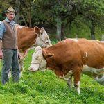 Ministerul Agriculturii demarează plata subvențiilor pentru fermieri