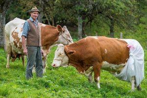 Cererile pentru ajutorul creșterii animalelor pot să fie depuse la APIA până în 29 ianuarie