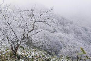 Val de frig peste Timiş. Ce măsuri a luat Comitetul Judeţean pentru Situaţii de Urgenţă