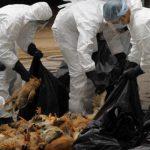 Focare de gripă aviară confirmate la nivel național