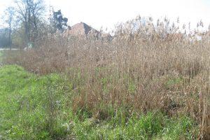 Autoritățile au identificat terenuri care ar putea să fie amenajate ca parcuri, scuaruri sau zone verzi