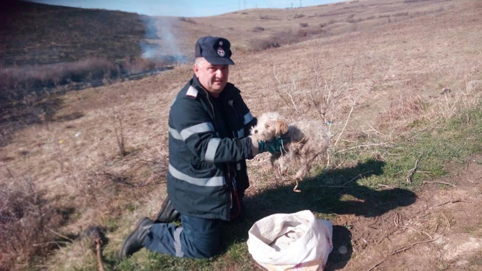 Cățel salvat din calea flăcărilor de un pompier hunedorean