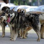Tu aduni resturile fiziologice după câinele tău? Dacă nu, te poate costa 1.000 de lei, la Timișoara