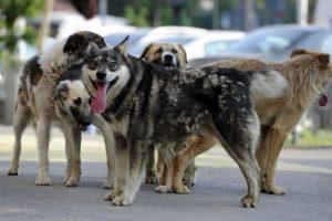 Edilul Timișoarei, președintele unei comisii de gestionare a cadavrelor de câini. Ce spune Nicolae Robu