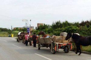 Grup de nomazi aciuit în zona Mehala, trimis acasă