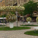 Festivalul Timfloralis va avea loc în trei mari pieţe din centrul oraşului