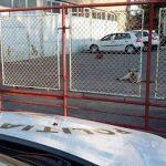 Cu ce sumă a fost amendat un timișorean al cărui câine a sărit la un biciclist
