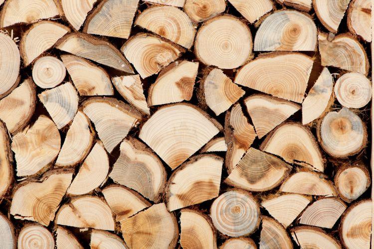 Cum s-a gândit un timişean să facă rost de lemne pentru iarnă