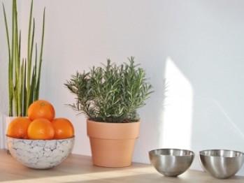 Ce plante vindecătoare poți crește în casă