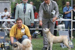 Cei mai frumoși câini, la Timișoara, în cadrul unei expoziții