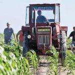 Fermierii au acces la 680 de milioane de euro, fonduri nerambursabile