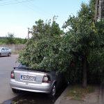Copaci rupți de furtună și căzuți peste mașini (FOTO)