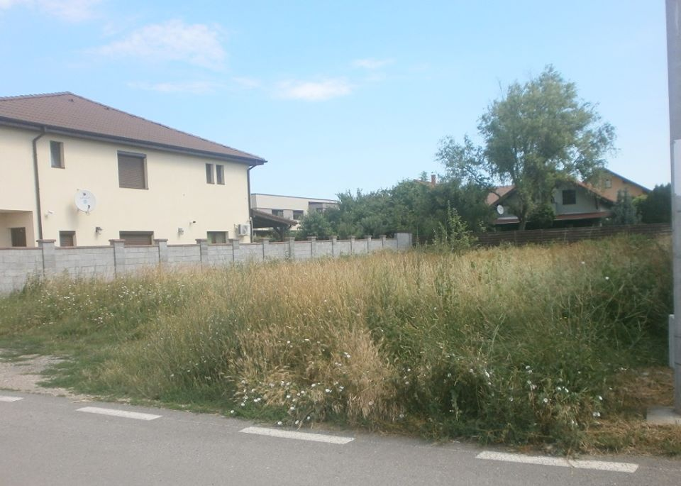 Amenzi de 10 mii de euro pentru proprietarii de terenuri care nu au cosit ambrozia şi alte buruieni