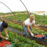 O delegație europarlamentară verifică situația muncitoarelor românce din Sicilia