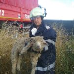 Miel salvat de pompieri dintr-un incendiu de vegetație