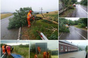 Furtuna a făcut dezastru şi pe şosele: copaci şi indicatoare rutiere au fost puse la pământ